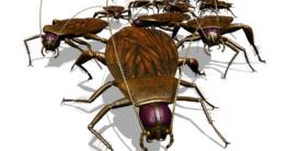Kakerlaken Invasion